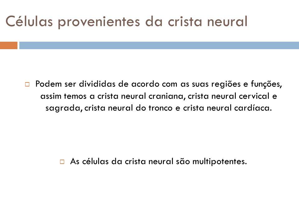 Células provenientes da crista neural Podem ser divididas de acordo com as suas regiões e funções, assim temos a crista neural craniana, crista neural
