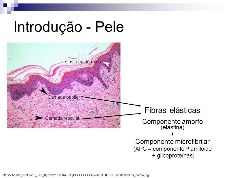 O aumento da área ocupada por fibras elásticas na derme reticular pode estar relacionado a: Redução da espessura da derme; Deposição de substâncias; Síntese de tecido normal ou anormal; Degradação das fibras elásticas; Nenhuma diferença entre fumantes e não fumantes foi observada na espessura da derme nem na deposição de substâncias externas nas fibras elásticas em estudos anteriores.