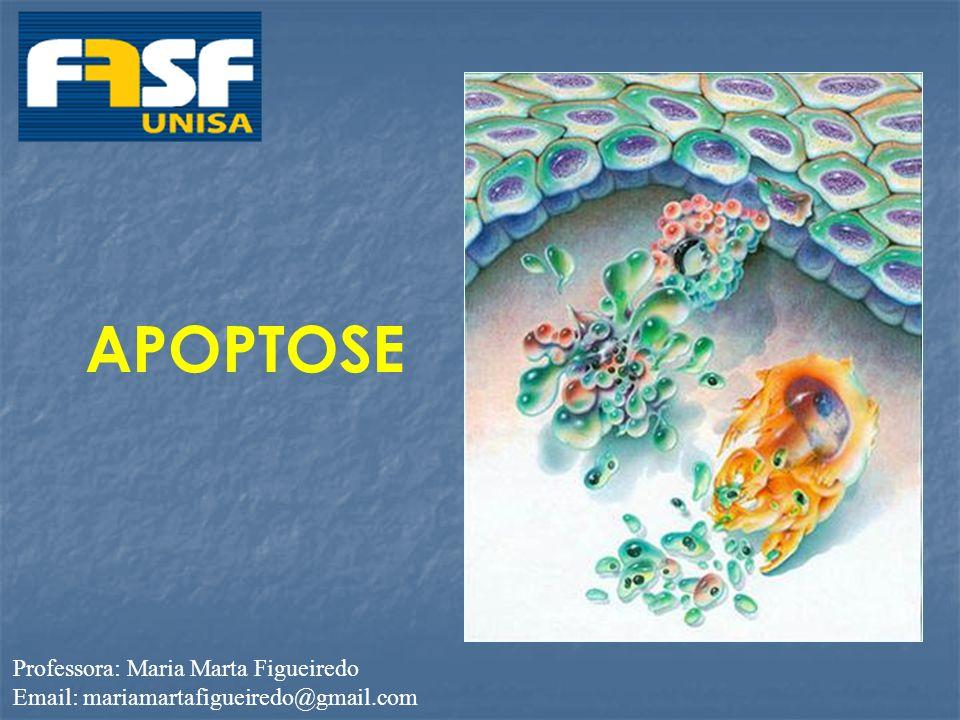 APOPTOSE Professora: Maria Marta Figueiredo Email: mariamartafigueiredo@gmail.com