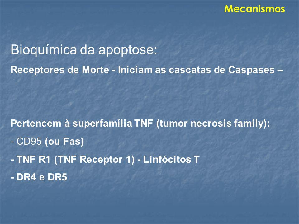 Bioquímica da apoptose: Receptores de Morte - Iniciam as cascatas de Caspases – Pertencem à superfamília TNF (tumor necrosis family): - CD95 (ou Fas)