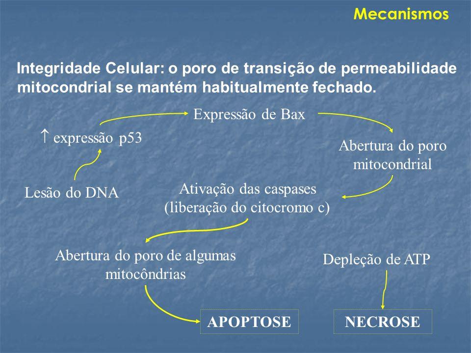 Integridade Celular: o poro de transição de permeabilidade mitocondrial se mantém habitualmente fechado. APOPTOSE Depleção de ATP NECROSE expressão p5