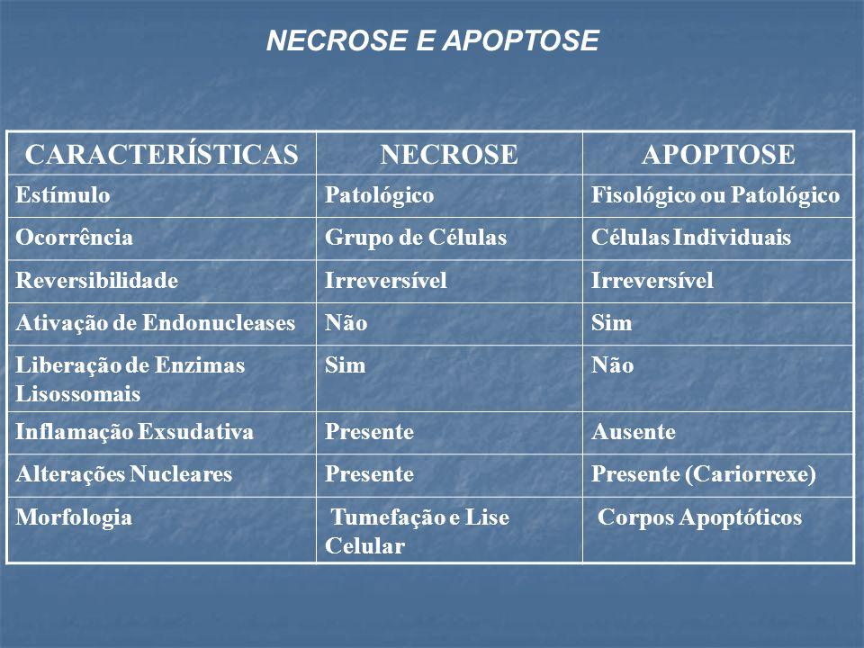 CARACTERÍSTICASNECROSEAPOPTOSE EstímuloPatológicoFisológico ou Patológico OcorrênciaGrupo de CélulasCélulas Individuais ReversibilidadeIrreversível At