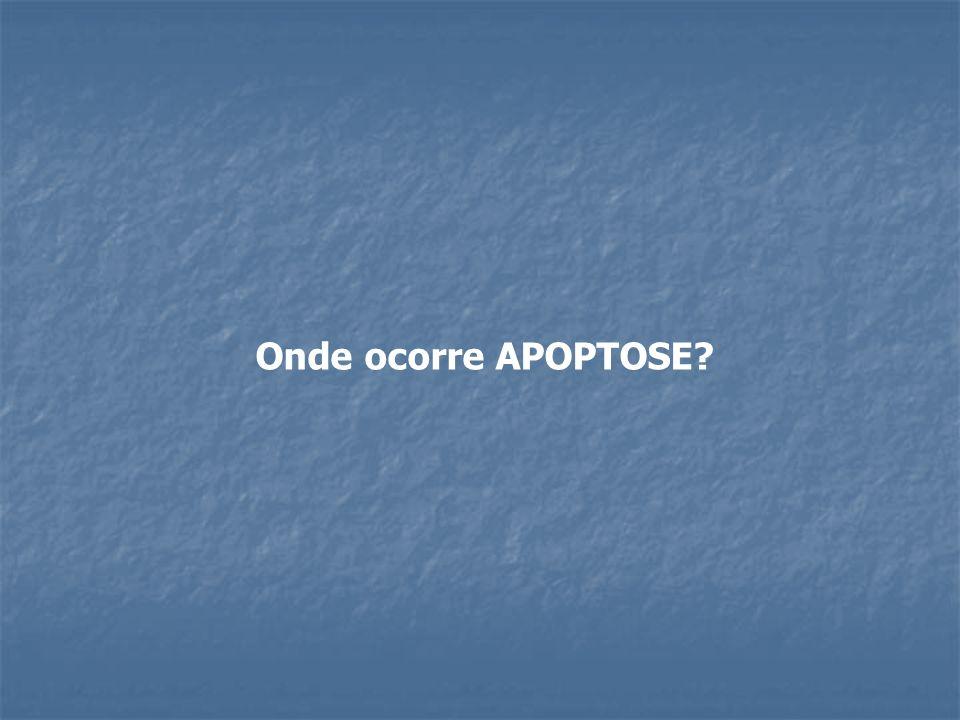 Onde ocorre APOPTOSE?