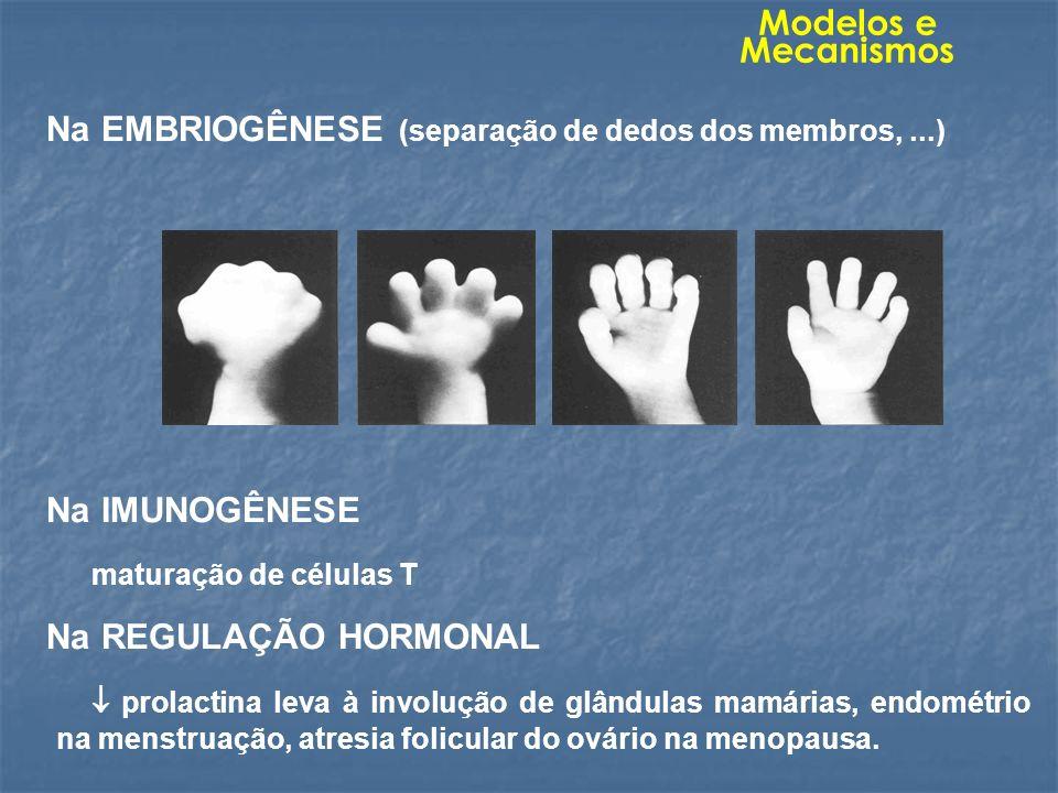Na EMBRIOGÊNESE (separação de dedos dos membros,...) Na IMUNOGÊNESE maturação de células T Na REGULAÇÃO HORMONAL prolactina leva à involução de glându