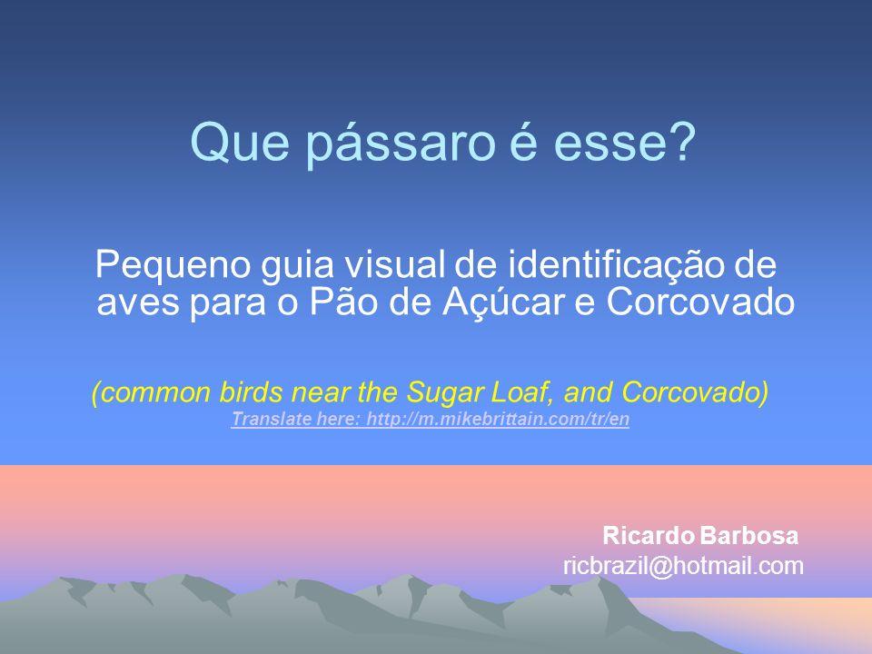 É grande o numero de turistas que passam pelo Rio de Janeiro a caminho da Amazônia ou do Pantanal, e entre estes eco-turistas grande parcela é de birdwatchers.