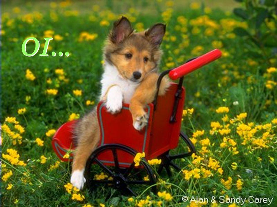 Facilitador:http://www.esoterikha.com Que posso desejar para hoje??? Que posso desejar para hoje???