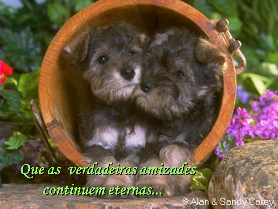 Facilitador:http://www.esoterikha.com Que as verdadeiras amizades continuem eternas... Que as verdadeiras amizades continuem eternas...