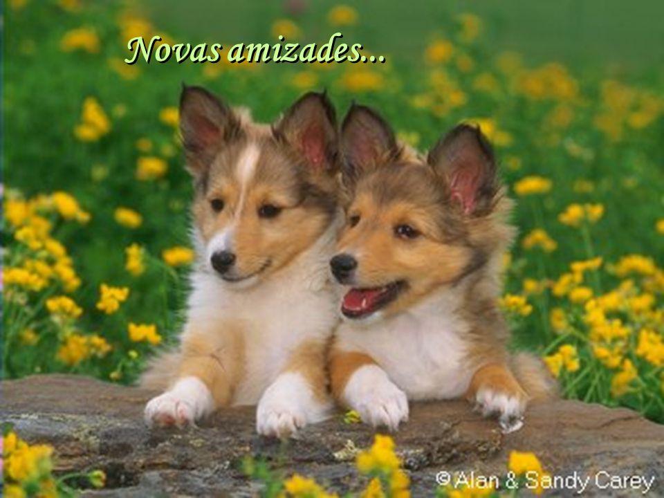 Facilitador:http://www.esoterikha.com Novos amores...