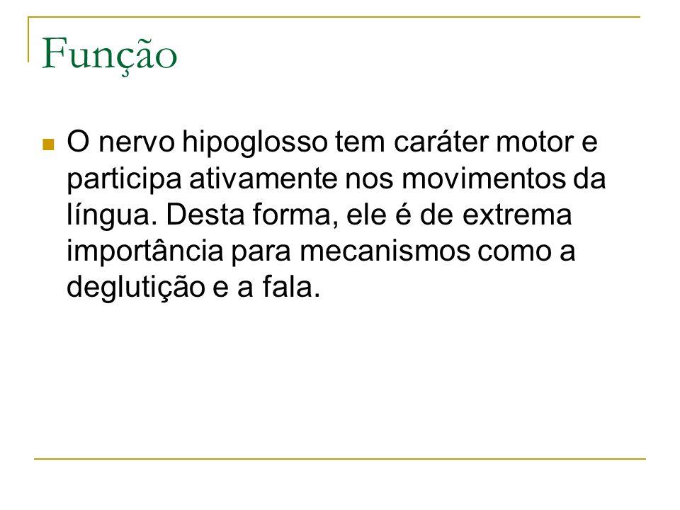 Função O nervo hipoglosso tem caráter motor e participa ativamente nos movimentos da língua. Desta forma, ele é de extrema importância para mecanismos