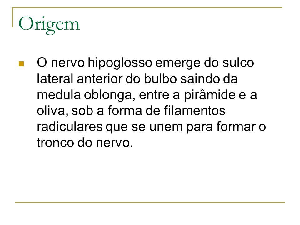 Origem O nervo hipoglosso emerge do sulco lateral anterior do bulbo saindo da medula oblonga, entre a pirâmide e a oliva, sob a forma de filamentos ra
