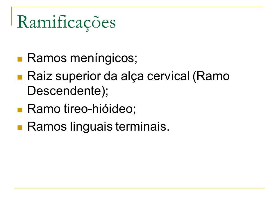 Ramificações Ramos meníngicos; Raiz superior da alça cervical (Ramo Descendente); Ramo tireo-hióideo; Ramos linguais terminais.