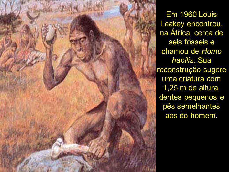 Em 1960 Louis Leakey encontrou, na África, cerca de seis fósseis e chamou de Homo habilis. Sua reconstrução sugere uma criatura com 1,25 m de altura,