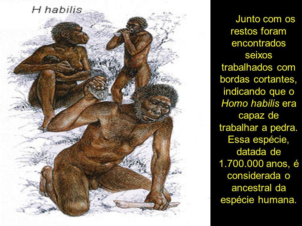 Junto com os restos foram encontrados seixos trabalhados com bordas cortantes, indicando que o Homo habilis era capaz de trabalhar a pedra. Essa espéc