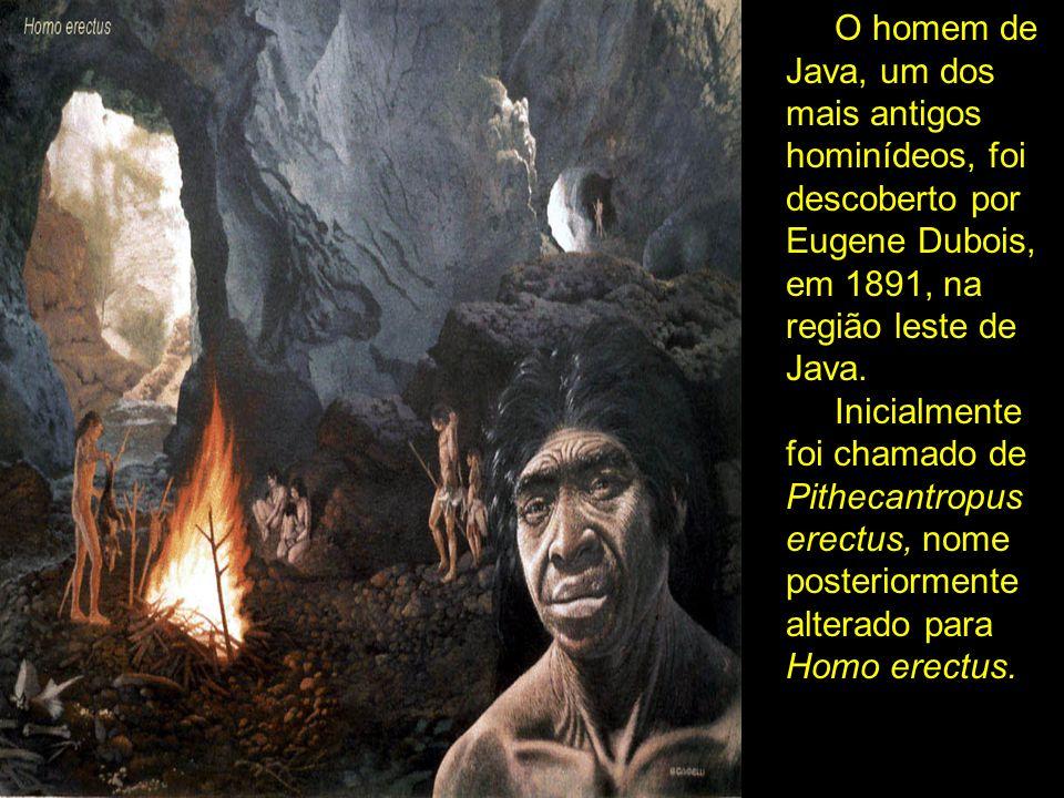 O homem de Java, um dos mais antigos hominídeos, foi descoberto por Eugene Dubois, em 1891, na região leste de Java. Inicialmente foi chamado de Pithe