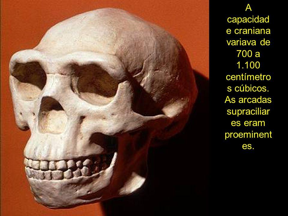 A capacidad e craniana variava de 700 a 1.100 centímetro s cúbicos. As arcadas supraciliar es eram proeminent es.