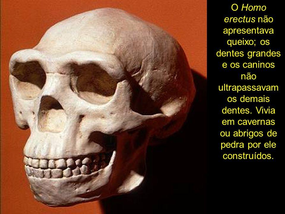O Homo erectus não apresentava queixo; os dentes grandes e os caninos não ultrapassavam os demais dentes. Vivia em cavernas ou abrigos de pedra por el