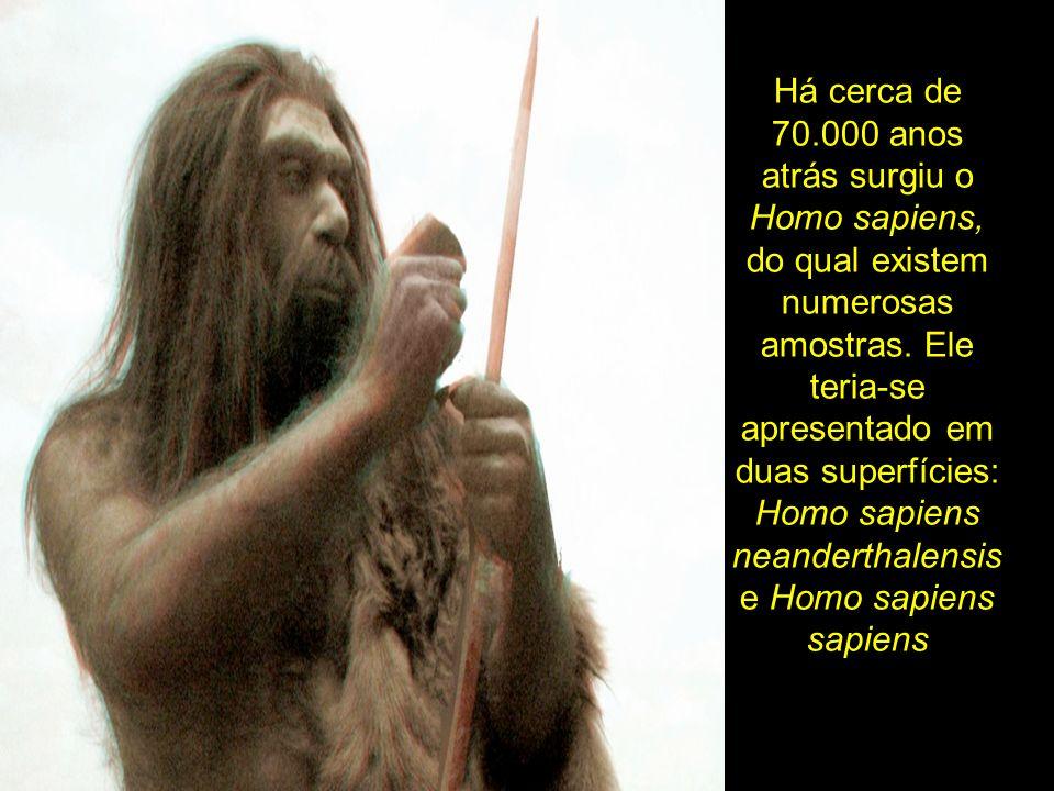 Há cerca de 70.000 anos atrás surgiu o Homo sapiens, do qual existem numerosas amostras. Ele teria-se apresentado em duas superfícies: Homo sapiens ne
