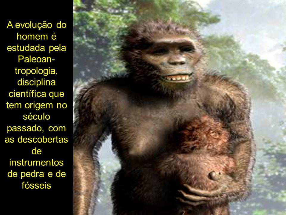 A evolução do homem é estudada pela Paleoan- tropologia, disciplina científica que tem origem no século passado, com as descobertas de instrumentos de