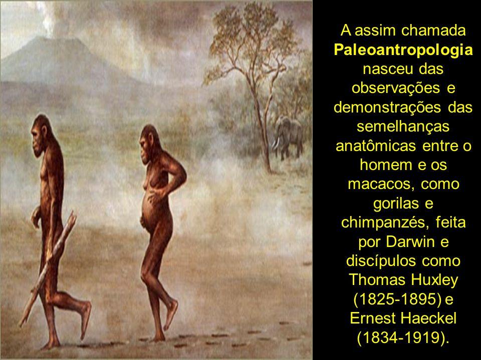 A assim chamada Paleoantropologia nasceu das observações e demonstrações das semelhanças anatômicas entre o homem e os macacos, como gorilas e chimpan