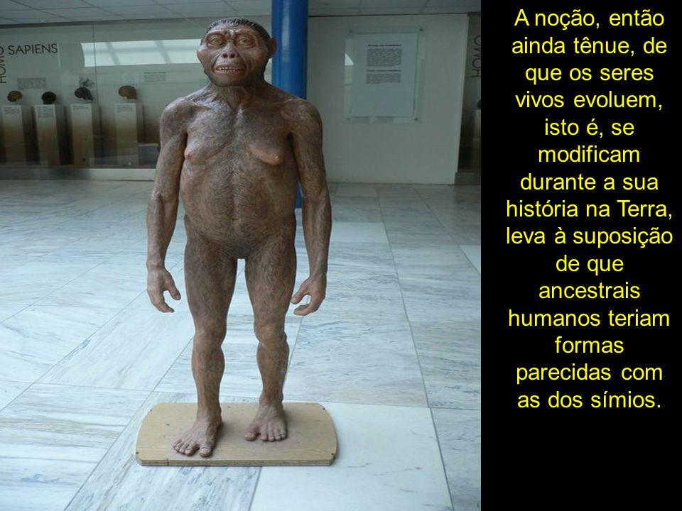 Buscava-se, então, freneticamente, o elo perdido, isto é, um animal a meio caminho entre o homem e o macaco, ancestral entre homens e macacos, como rapidamente foi popularizado.