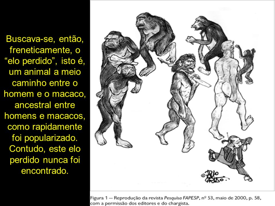 Buscava-se, então, freneticamente, o elo perdido, isto é, um animal a meio caminho entre o homem e o macaco, ancestral entre homens e macacos, como ra
