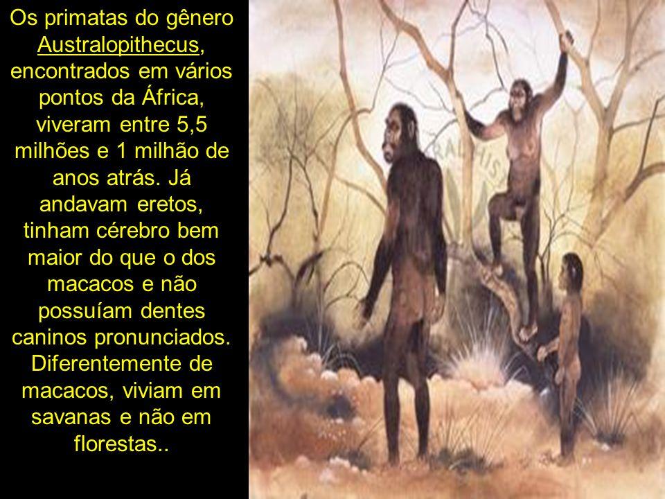 Os primatas do gênero Australopithecus, encontrados em vários pontos da África, viveram entre 5,5 milhões e 1 milhão de anos atrás. Já andavam eretos,