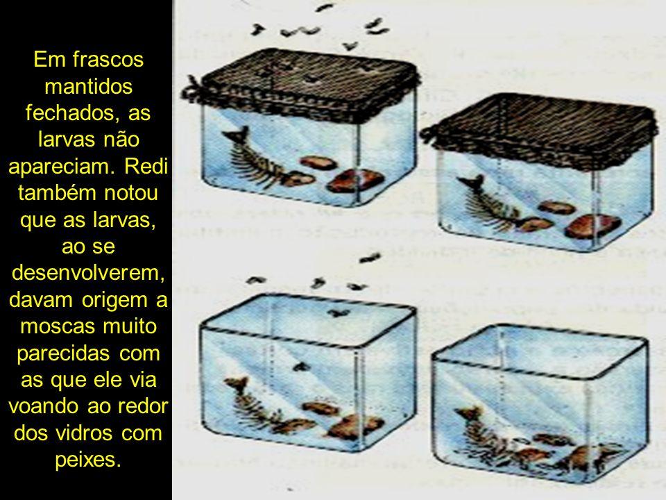 Em frascos mantidos fechados, as larvas não apareciam. Redi também notou que as larvas, ao se desenvolverem, davam origem a moscas muito parecidas com