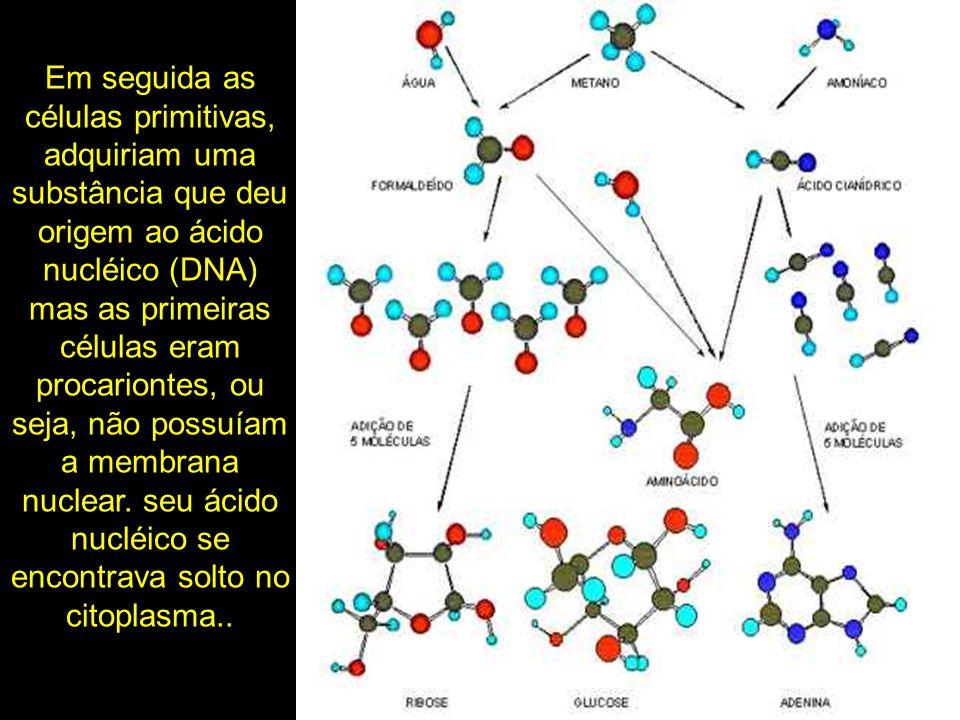 Em seguida as células primitivas, adquiriam uma substância que deu origem ao ácido nucléico (DNA) mas as primeiras células eram procariontes, ou seja,