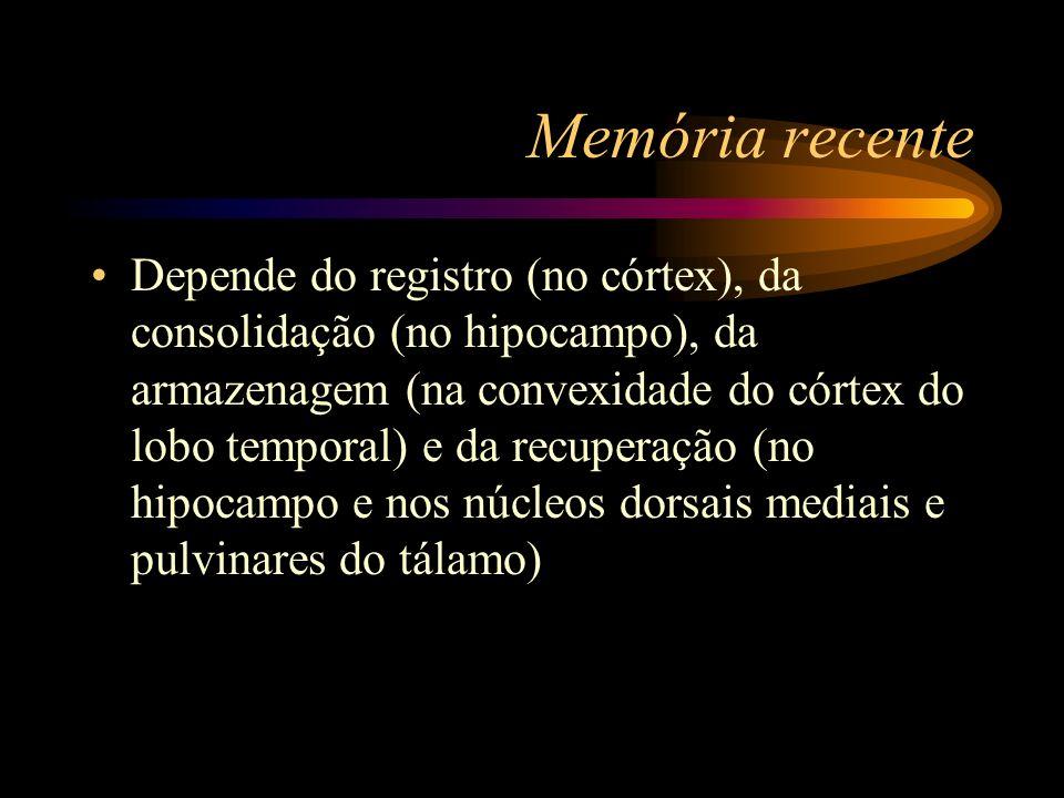 Memória recente Depende do registro (no córtex), da consolidação (no hipocampo), da armazenagem (na convexidade do córtex do lobo temporal) e da recup