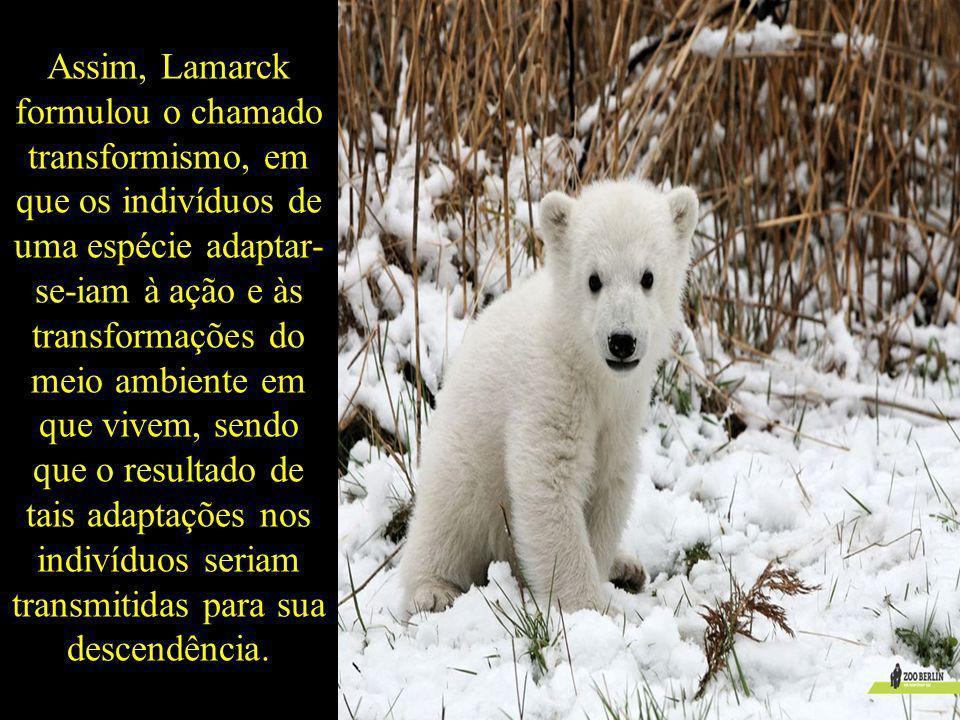 Assim, Lamarck formulou o chamado transformismo, em que os indivíduos de uma espécie adaptar- se-iam à ação e às transformações do meio ambiente em qu