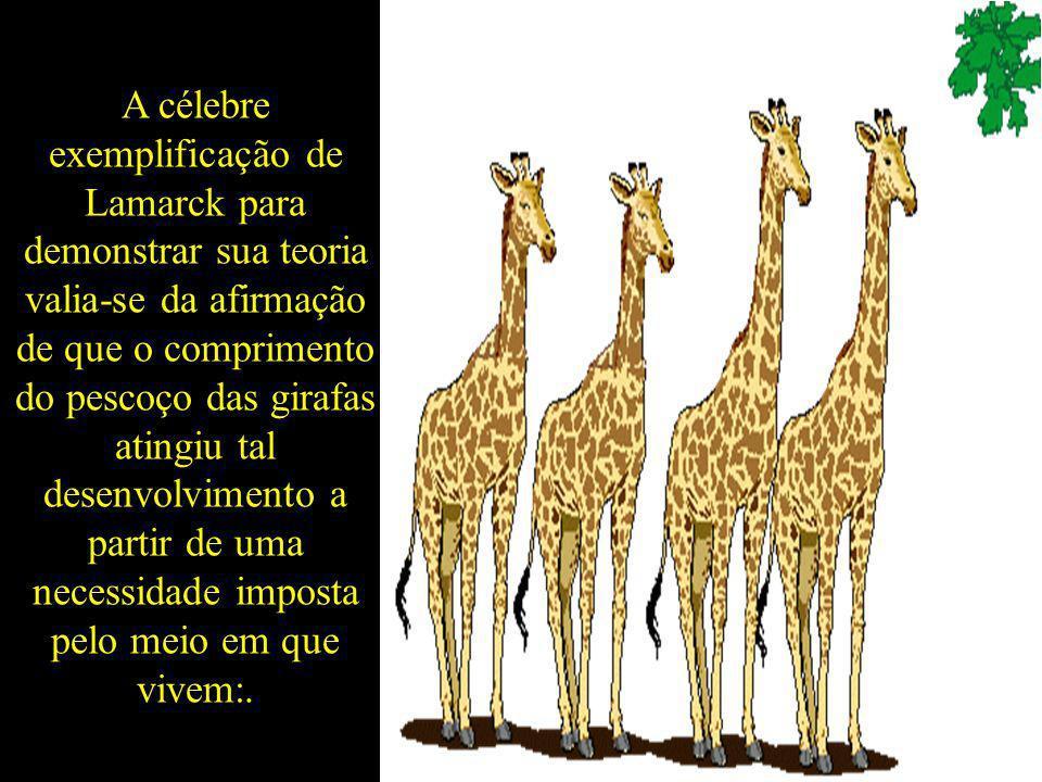 A célebre exemplificação de Lamarck para demonstrar sua teoria valia-se da afirmação de que o comprimento do pescoço das girafas atingiu tal desenvolv