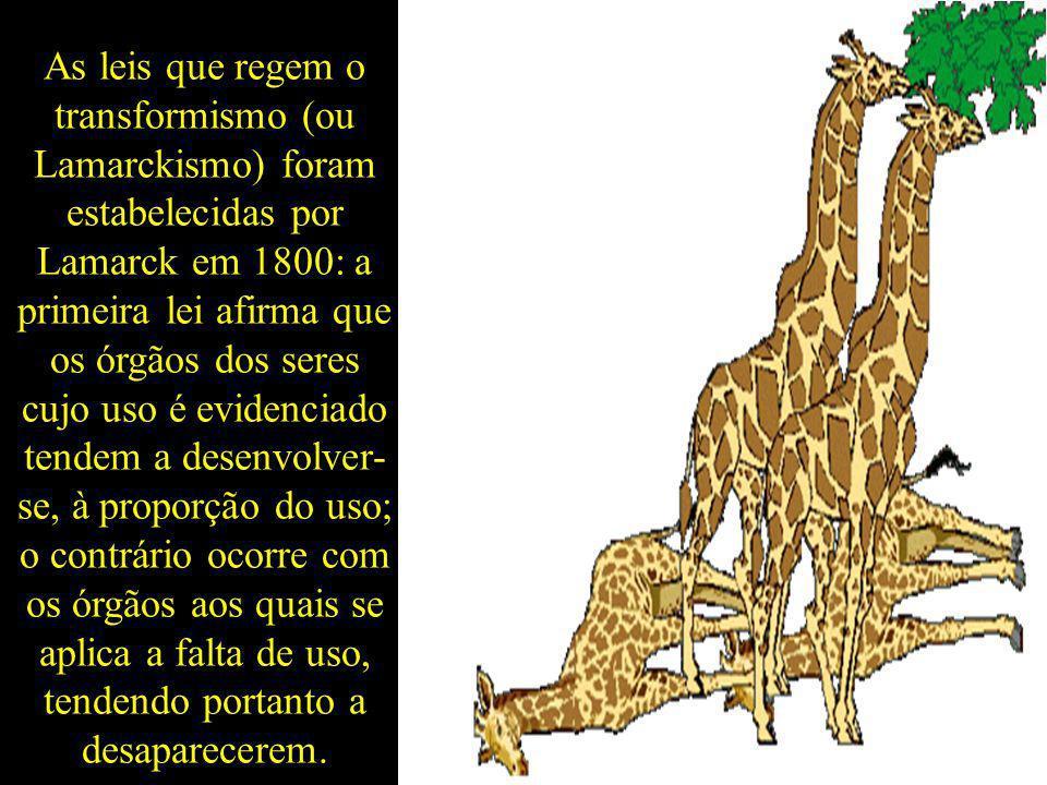 As leis que regem o transformismo (ou Lamarckismo) foram estabelecidas por Lamarck em 1800: a primeira lei afirma que os órgãos dos seres cujo uso é e