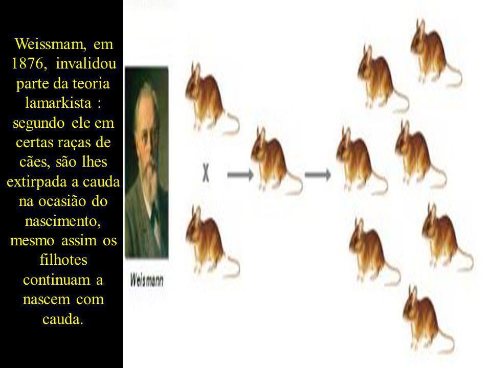 Weissmam, em 1876, invalidou parte da teoria lamarkista : segundo ele em certas raças de cães, são lhes extirpada a cauda na ocasião do nascimento, me