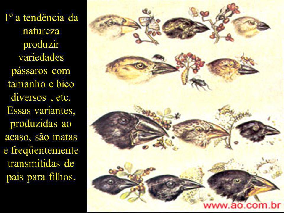 1º a tendência da natureza produzir variedades pássaros com tamanho e bico diversos, etc. Essas variantes, produzidas ao acaso, são inatas e freqüente