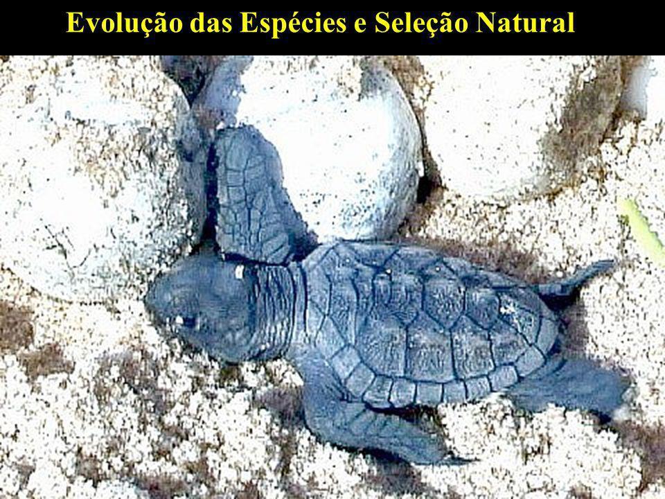 Evolução das Espécies e Seleção Natural