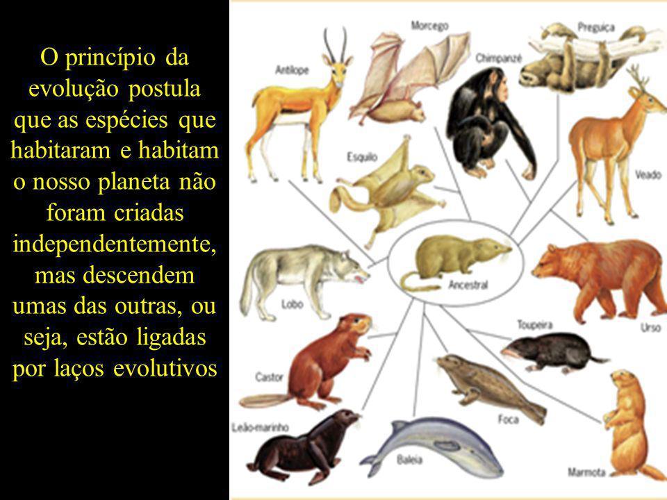 O princípio da evolução postula que as espécies que habitaram e habitam o nosso planeta não foram criadas independentemente, mas descendem umas das ou