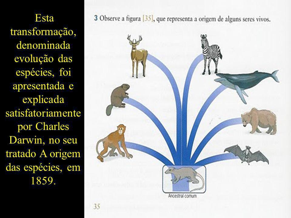 Esta transformação, denominada evolução das espécies, foi apresentada e explicada satisfatoriamente por Charles Darwin, no seu tratado A origem das es