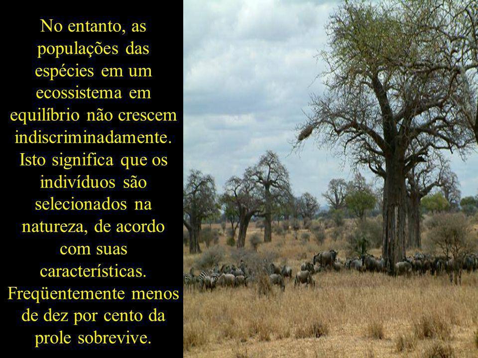 No entanto, as populações das espécies em um ecossistema em equilíbrio não crescem indiscriminadamente. Isto significa que os indivíduos são seleciona