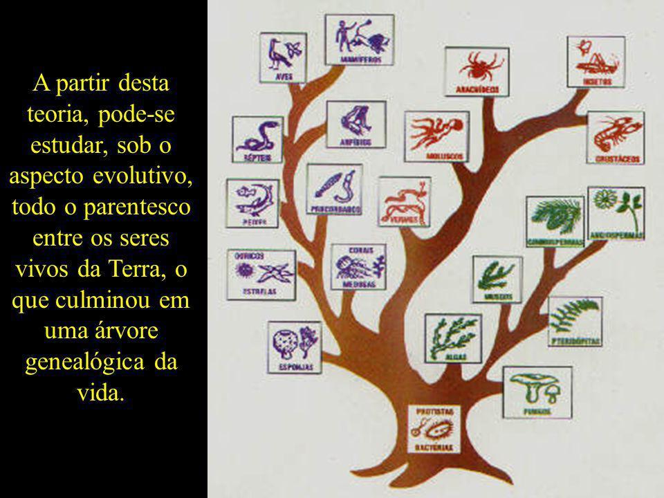 A partir desta teoria, pode-se estudar, sob o aspecto evolutivo, todo o parentesco entre os seres vivos da Terra, o que culminou em uma árvore genealó