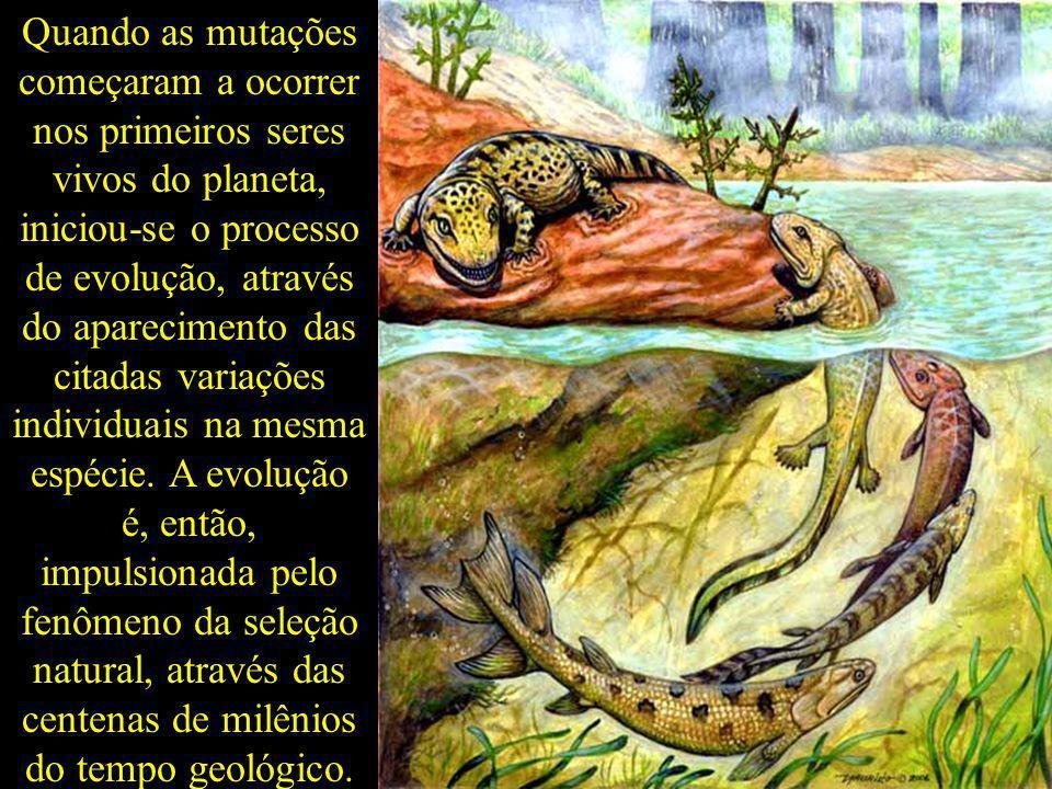 Quando as mutações começaram a ocorrer nos primeiros seres vivos do planeta, iniciou-se o processo de evolução, através do aparecimento das citadas va