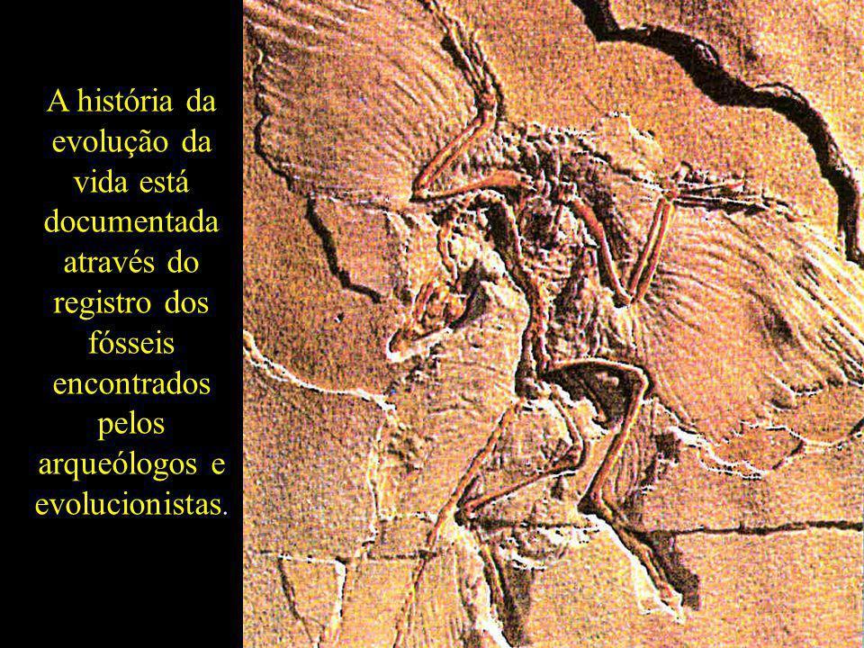. A história da evolução da vida está documentada através do registro dos fósseis encontrados pelos arqueólogos e evolucionistas.