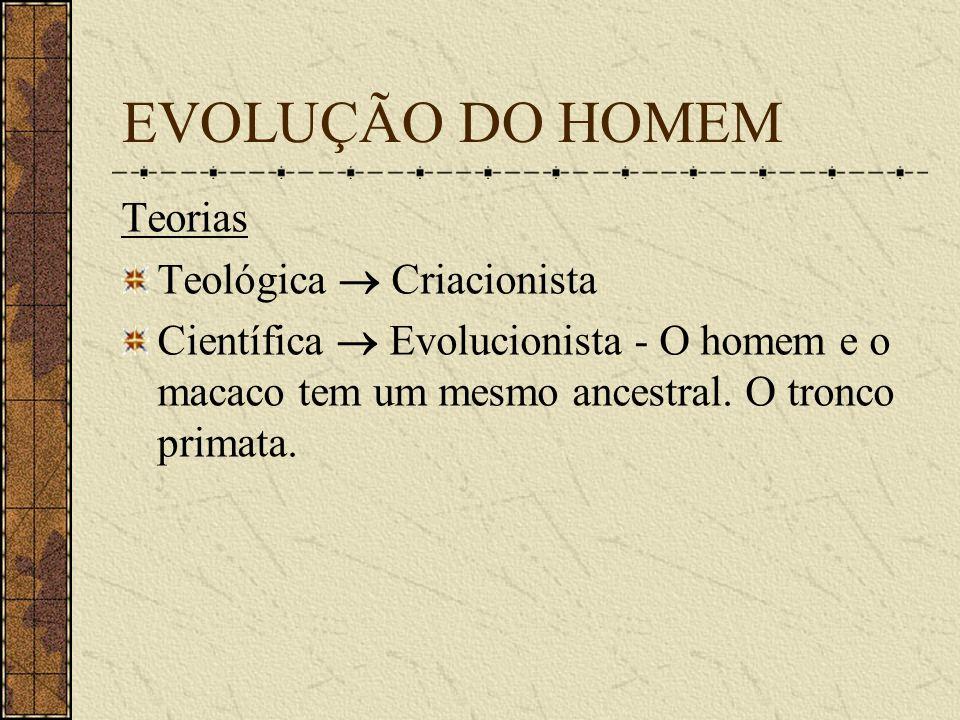 EVOLUÇÃO DO HOMEM Teorias Teológica Criacionista Científica Evolucionista - O homem e o macaco tem um mesmo ancestral. O tronco primata.