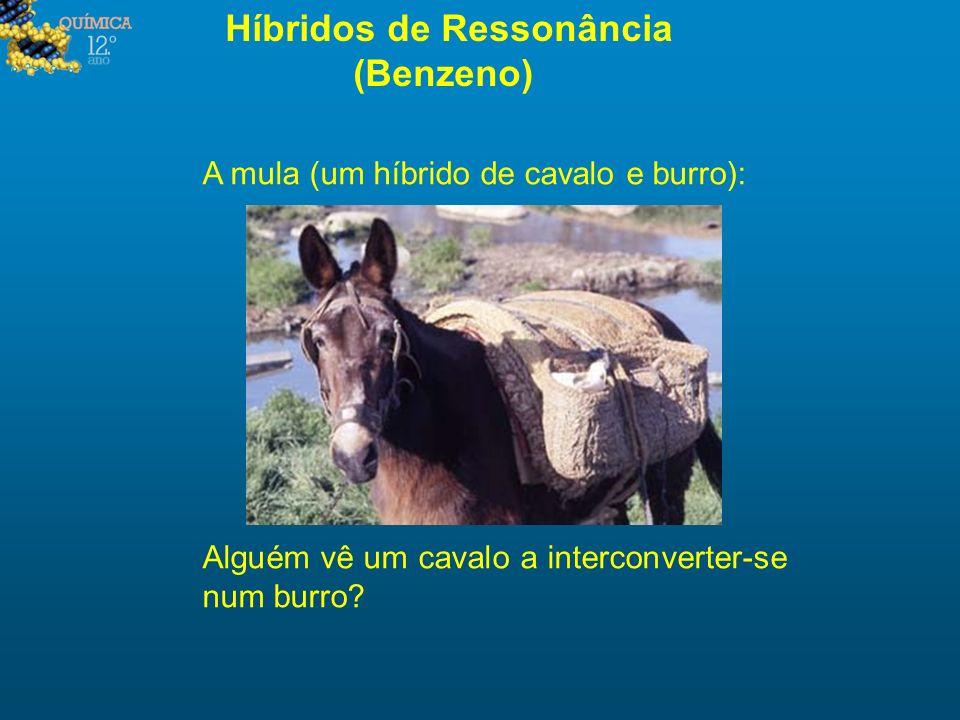 Híbridos de Ressonância (Benzeno) A mula (um híbrido de cavalo e burro): Alguém vê um cavalo a interconverter-se num burro?