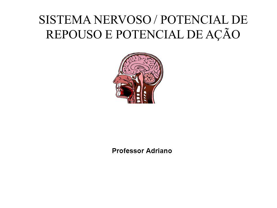 SISTEMA NERVOSO / POTENCIAL DE REPOUSO E POTENCIAL DE AÇÃO Professor Adriano