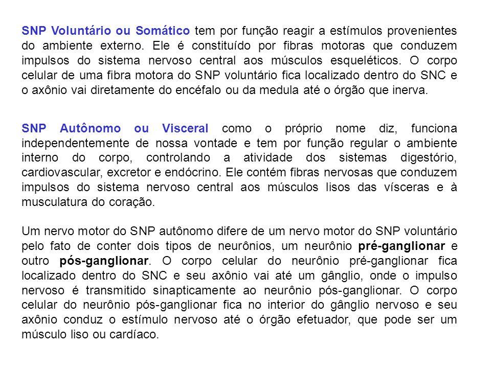 SNP Voluntário ou Somático tem por função reagir a estímulos provenientes do ambiente externo. Ele é constituído por fibras motoras que conduzem impul