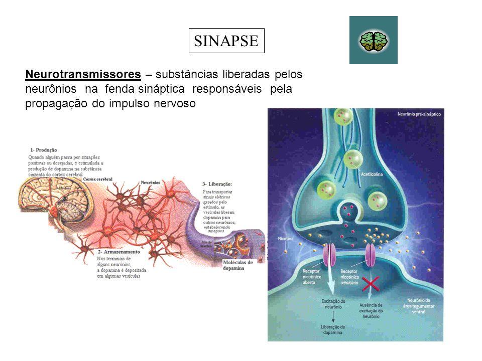 Os nervos que levam informações da periferia do corpo para o SNC são os nervos sensoriais (nervos aferentes ou nervos sensitivos), que são formados por prolongamentos de neurônios sensoriais.