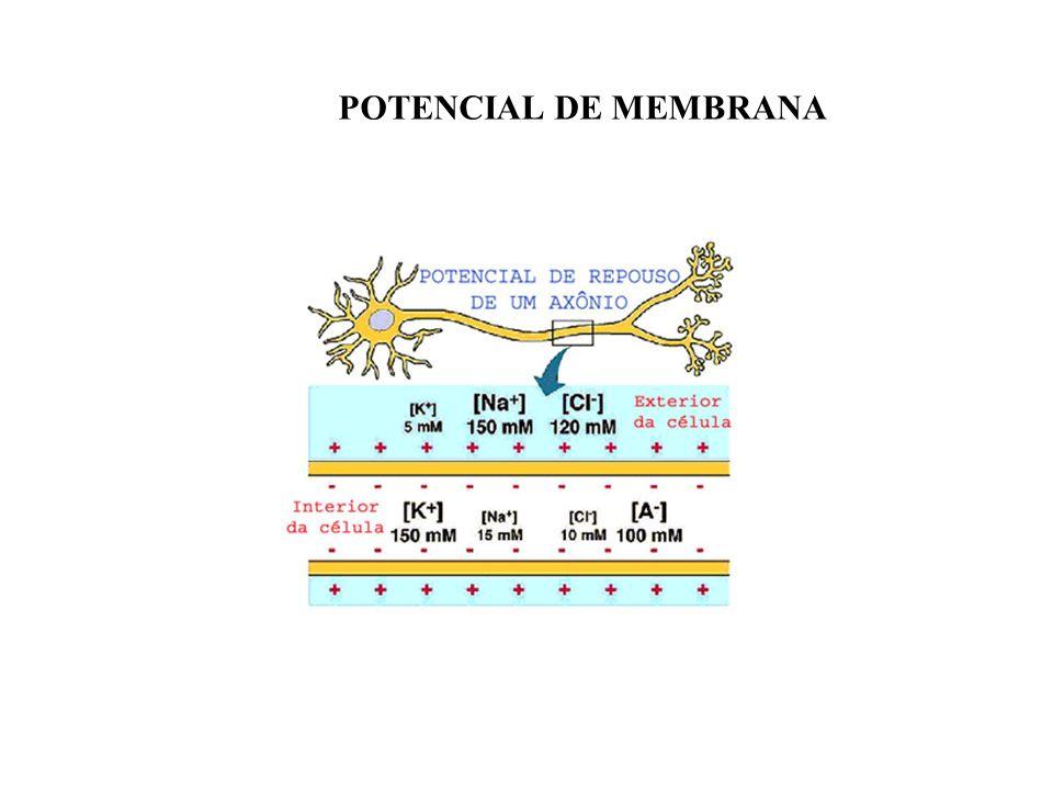CAUSAS DA MANUTENÇÃO DO POTENCIAL DE MEMBRANA 1- permeabilidade da membrana cel.