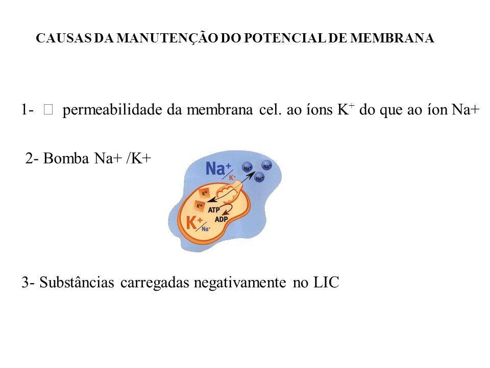 CAUSAS DA MANUTENÇÃO DO POTENCIAL DE MEMBRANA 1- permeabilidade da membrana cel. ao íons K + do que ao íon Na+ 2- Bomba Na+ /K+ 3- Substâncias carrega