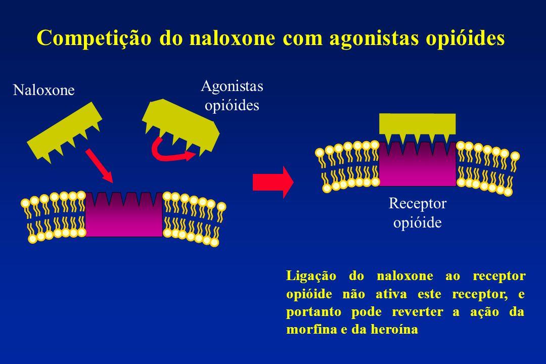 Competição do naloxone com agonistas opióides Naloxone Agonistas opióides Receptor opióide Ligação do naloxone ao receptor opióide não ativa este rece
