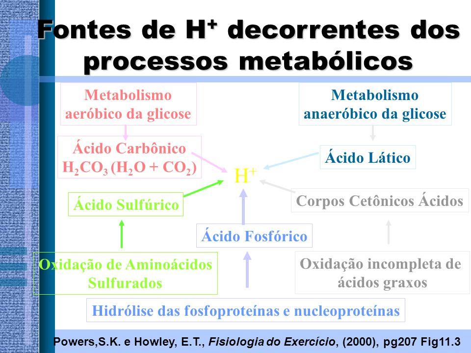 Fontes de H + decorrentes dos processos metabólicos Powers,S.K. e Howley, E.T., Fisiologia do Exercício, (2000), pg207 Fig11.3 Metabolismo aeróbico da